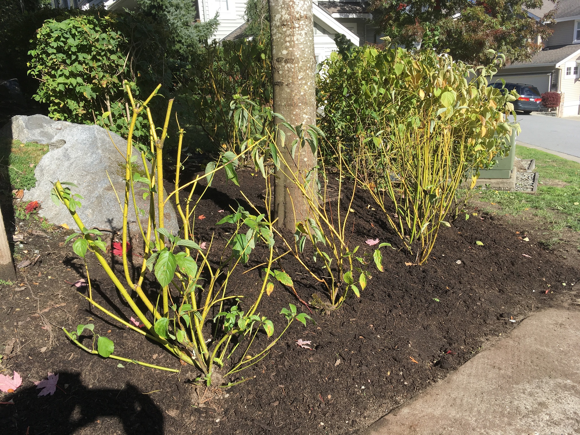 Mulch Archives - Proper Landscaping Inc.